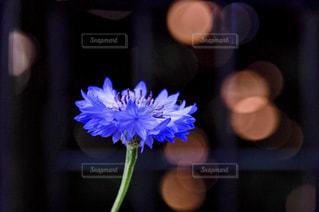 花,ぼかし,玉ボケ,ヤグルマギク