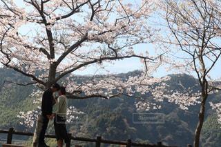 空,公園,花,春,カップル,屋外,樹木,お花見,デート,草木,桜の花,日中,さくら,映え,ブロッサム,おしゃぴく