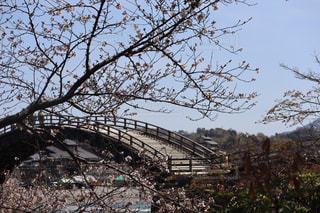 空,公園,花,春,桜,森林,樹木,錦帯橋,ブロッサム