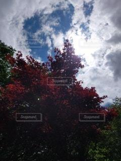 自然,空,屋外,太陽,雲,樹木