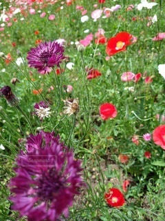花,屋外,ガーデン,フローラ