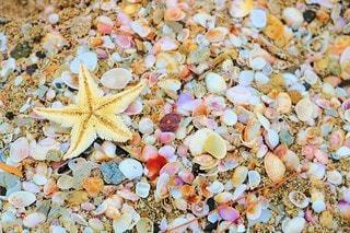 海,屋外,ビーチ,砂浜,貝殻,海岸,星,旅行,ヒトデ,貝