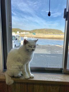 猫,動物,窓,猫島 相島 相島の猫 猫島の猫 地域猫
