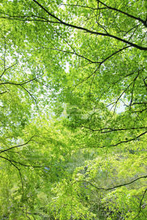 自然,春,夏,森林,木,屋外,緑,葉,景色,爽やか,樹木,草木