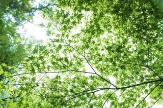 自然,春,夏,森林,屋外,緑,葉,爽やか,樹木,草木