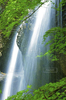 自然,春,夏,森林,木,屋外,緑,水,葉,景色,滝,爽やか,樹木,草木,水流