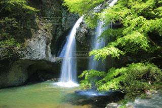 自然,春,夏,森林,屋外,緑,水,川,水面,葉,滝,爽やか,樹木,涼しげ,草木,水流