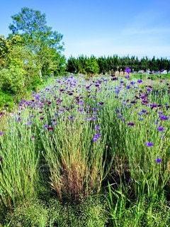自然,風景,花,緑,紫,景色,草,ガーデン,フローラ
