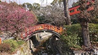 花,橋,森林,屋外,神社,景色,旅行