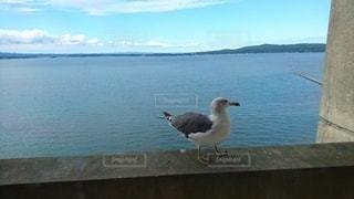 海,空,鳥,屋外,ビーチ,水面,海岸,カモメ,眺め,水鳥