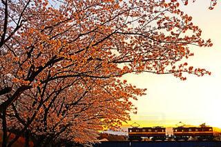 空,桜,夕陽,夕景,サンセット,貨物,日中,三岐鉄道