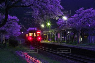 自然,花,桜,屋外,景色,樹木,夕景,サンセット,草木,宵闇,長良川鉄道,宵闇の桜