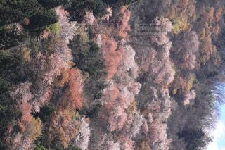 風景,空,春,桜,屋外,樹木,山桜