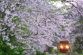 空,桜,緑,鉄道,鉄道写真,長良川鉄道