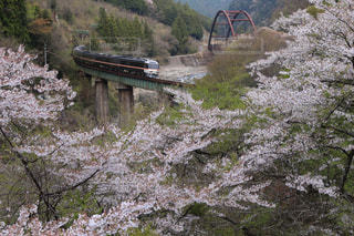 空,春,桜,緑,新緑,鉄道,飛騨,日中,高山本線