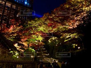 空,秋,夜,屋外,神社,樹木