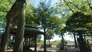 公園,屋外,樹木,日陰,草木