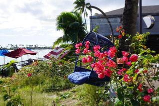 カフェ,空,花,屋外,草,樹木,ハワイ,Hawaii,草木,ガーデン,ハワイアンブリューイングカフェ