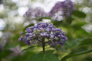 花のクローズアップの写真・画像素材[3195843]