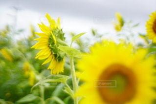 花のクローズアップの写真・画像素材[3492856]
