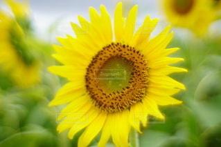 花のクローズアップの写真・画像素材[3492864]