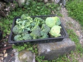 食べ物,野菜,食品,食材,フレッシュ,ベジタブル