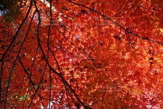 木のクローズアップの写真・画像素材[3718095]