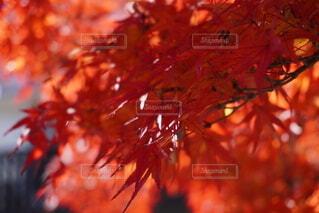 木のクローズアップの写真・画像素材[3721327]