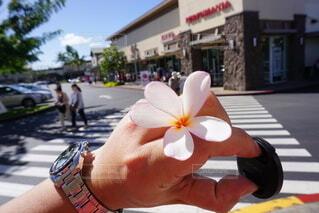 花を持つ手の写真・画像素材[3782649]