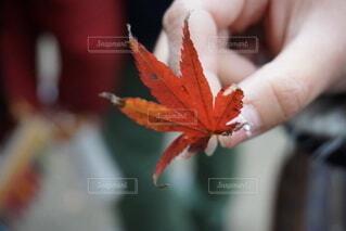 花を持つ手の写真・画像素材[3801440]