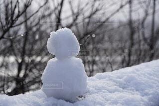 雪に覆われた畑の写真・画像素材[4024136]