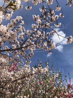 自然,空,花,桜の花