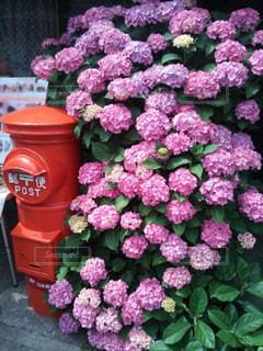 紫陽花とポストの写真・画像素材[3208730]