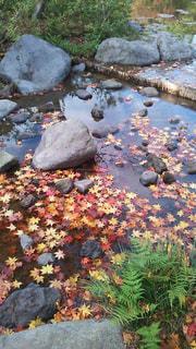 自然,風景,秋,紅葉,屋外,緑,赤,カラフル,水,黄色,水面,葉,もみじ,景色,草,落ち葉,樹木,岩,日本,日本庭園,石,ガーデン,浮かぶ