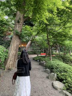 日本庭園を散歩の写真・画像素材[3211709]