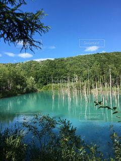 自然,風景,空,夏,緑,青空,青,水面,池,北海道,樹木,グリーン,青い池,美瑛,映り込み