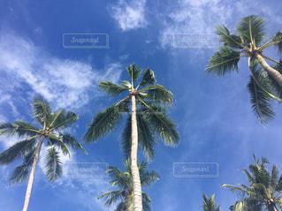 ヤシの木の写真・画像素材[3250459]