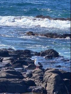 岩場に立つ鳥の写真・画像素材[3490606]