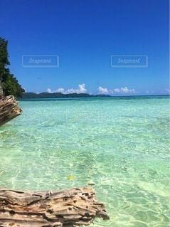 パラオの無人島の写真・画像素材[3552067]