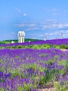 ラベンダー畑の写真・画像素材[3576520]