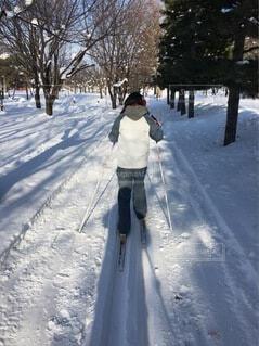 女性,自然,風景,公園,冬,森林,雪,屋外,樹木,人,スキー,運動,ウィンタースポーツ,日中,ジャージ,歩くスキー