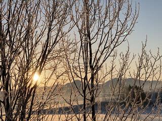 自然,風景,空,冬,木,屋外,朝日,晴れ,枝,北海道,Instagram,山,雪原,樹木,正月,朝,お正月,日の出,冷たい,新年,初日の出,草木,美瑛,インスタ映え
