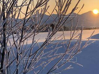 自然,空,冬,木,雪,屋外,朝日,晴れ,枝,北海道,Instagram,山,オレンジ,草,丘,樹木,正月,霜,朝,寒い,お正月,日の出,冷たい,新年,初日の出,樹氷,草木,冷凍,インスタ映え