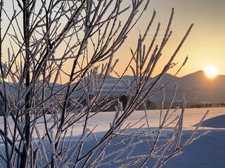 自然,風景,空,冬,木,雪,屋外,朝日,晴れ,枝,北海道,Instagram,山,オレンジ,草,丘,樹木,正月,朝,寒い,お正月,日の出,冷たい,新年,初日の出,樹氷,草木,冷凍,インスタ映え