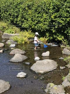 自然,夏,湖,水面,岩,水遊び,草木,魚取り