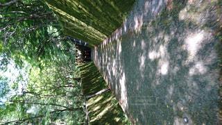 夏,屋外,樹木,涼しい,トンネル,キャンプ,草木