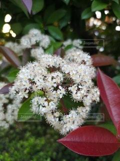 自然,花,屋外,鮮やか,白い花,樹木,小さな花,草木
