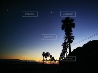 風景,空,夜,夕暮れ,ヤシの木