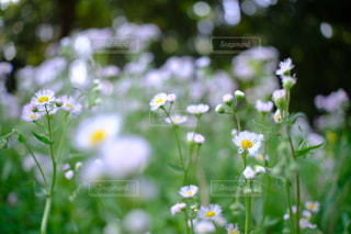 花,春,緑,白