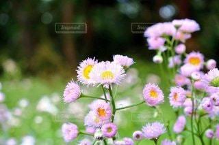 自然,風景,花,屋外,白,草木,花粉,フローラ